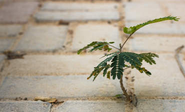 Resilient little tree growing out of concrete