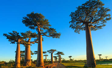 Sustainable Development Goal 15: Protect terrestrial ecosystems featured image