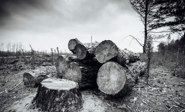Saving forests and keeping promises in the green supply chain featured image