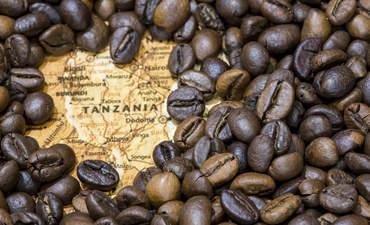 Tanzania Coffee
