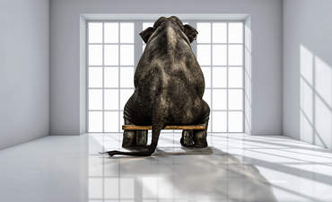 What to tell your CEO about the elephant in the boardroom featured image