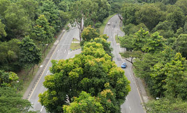 Can urban forests cultivate sustainable healthcare? featured image
