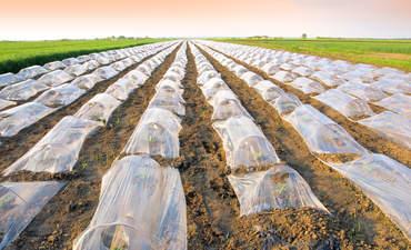 Plastic agriculture