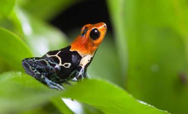 Amazon rainforest biodiversity deforestation