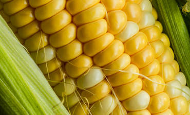 corn food farming sustainability