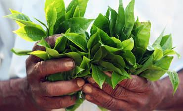 Heifer International's Pierre Ferrari on sustaining small farms featured image