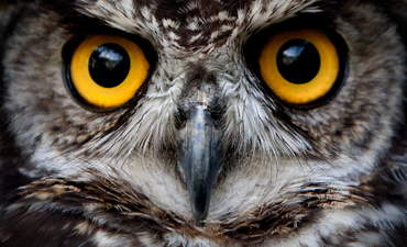 owl conservation investing impact technology