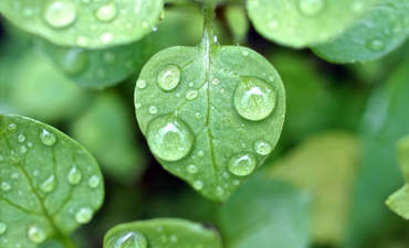 rain drop leaf rainfall climate change adaptation data
