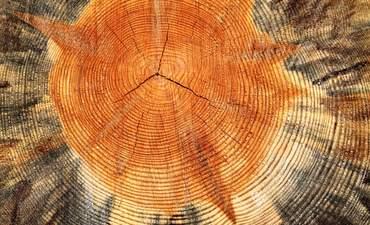 wooden stump and deforestation
