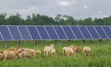 Hoosier Energy, solar sheep