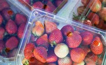 Strawberries in a plastic box