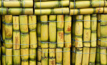 How Carnegie uses sugarcane to make greener textiles featured image