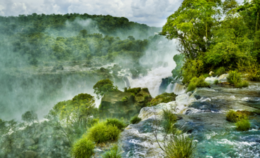 3 challenges — and opportunities — for businesses to help save tropical forests featured image