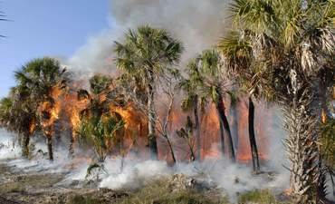 How satellites sound fire alarm in tropical forests featured image