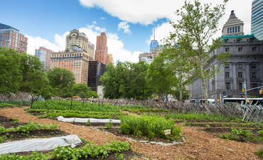 Urban farms now produce 1/5 of the world's food featured image