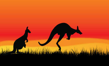 Wallaby, red background