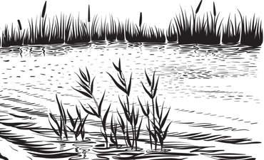 Wetland illustration