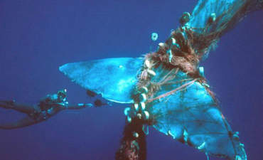 New fishing nets reduce bycatch, sparing sea life featured image