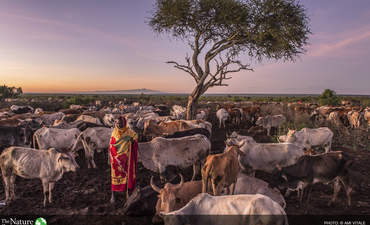 For-profit conservation: A new tool to mobilize investment? featured image