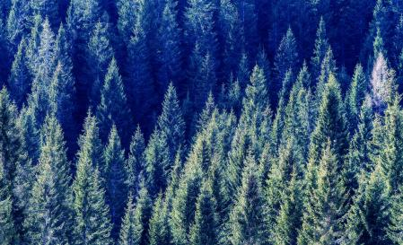 forest sequestering carbon