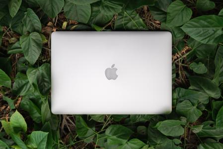 Laptop in leaves