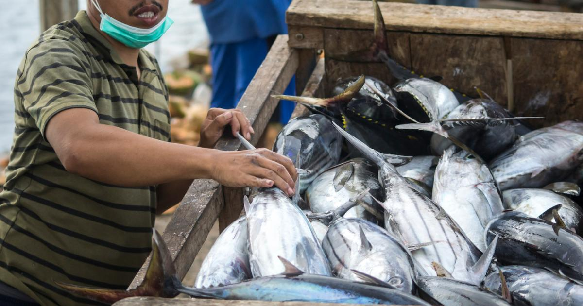How Walmart hooked a sustainable tuna supplier