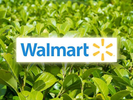 Walmart Turns Green Roofs Into Research Labs Greenbiz