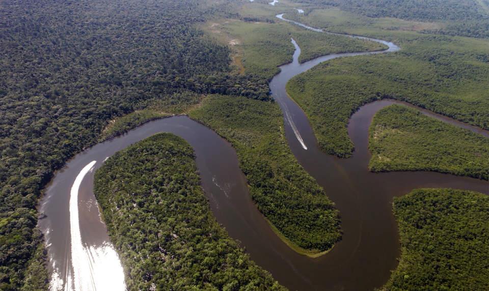 Good Rainforest Sites For Kids