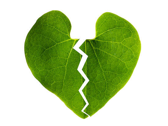 Image result for broken heart green
