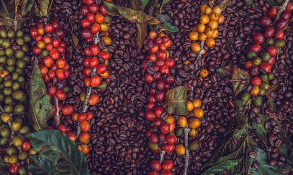 How roasters and retailers can support farmers and make coffee more sustainable