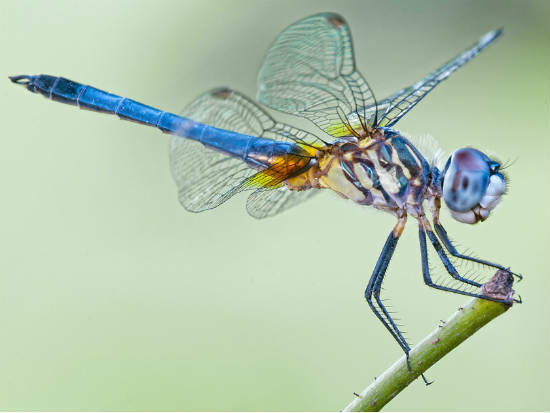 Dragonflies And Frogs Inspired The Best Of Biomimicry In