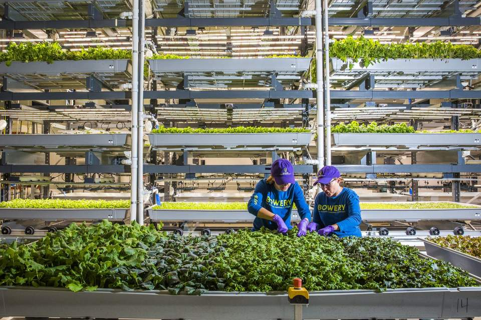 Microgrids, indoor agriculture go together like peas and carrots
