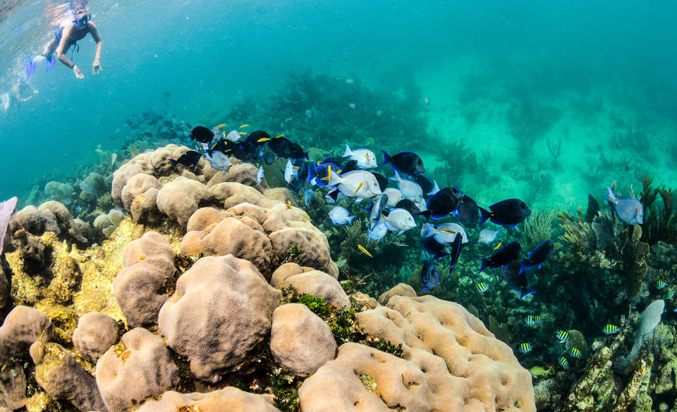 Cancun's coral reef receives a health insurance policy