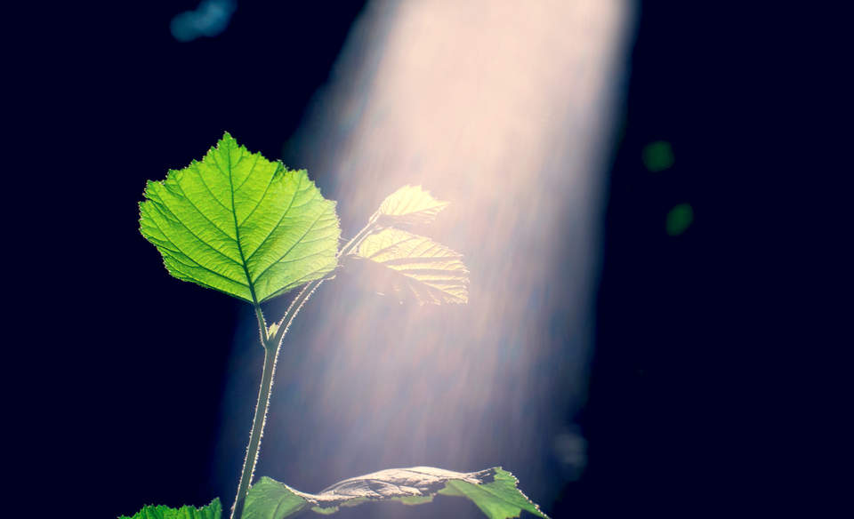 photo image Reclaiming lost energy: Can we wield photosynthesis to boost crop yields?