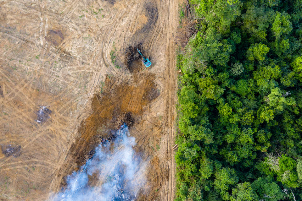 Big businesses are failing forests