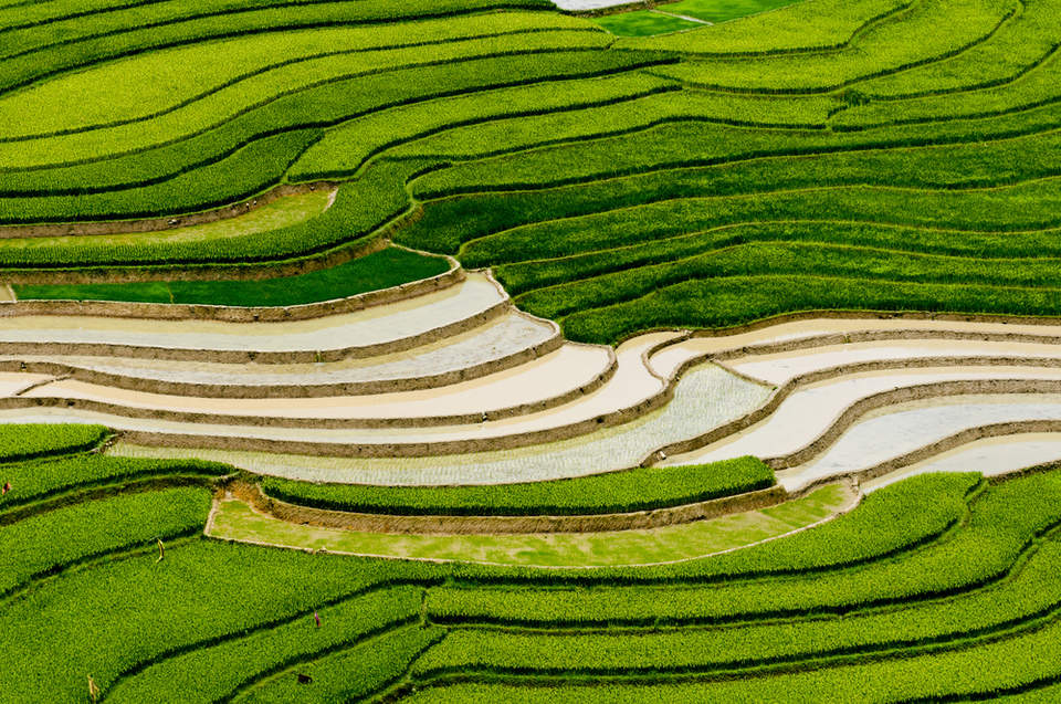 Rice 2 0  The Search For A More Sustainable Staple Food