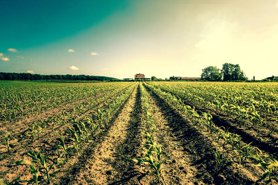 the farm that grows climate change solutions greenbiz