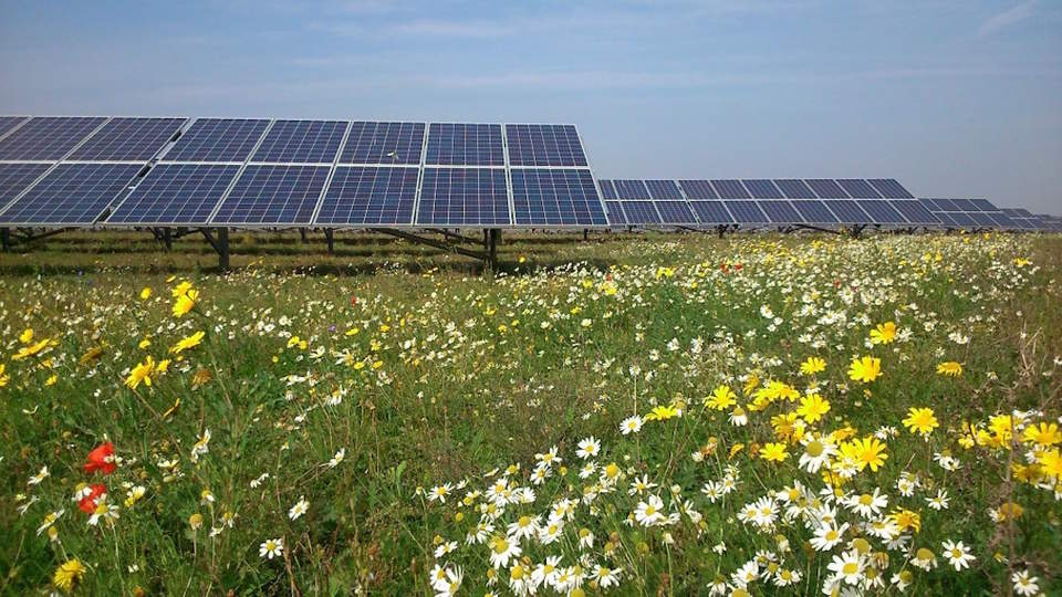 Solar Farms Could Make Fertile Habitats For Bees And