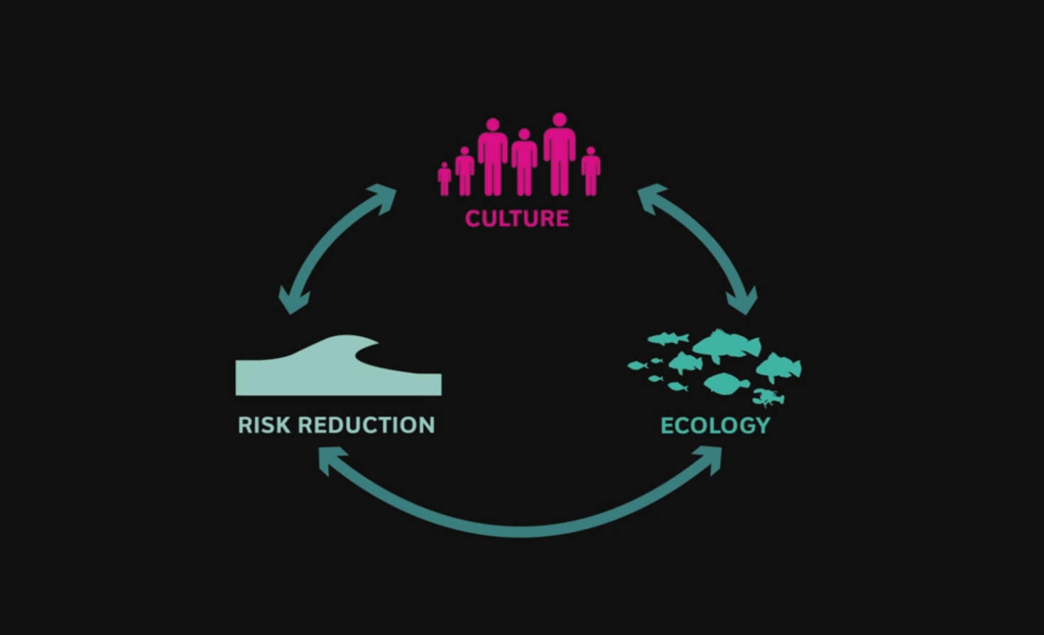 Living Breakwaters cycle of culture, ecology, and risk reduction