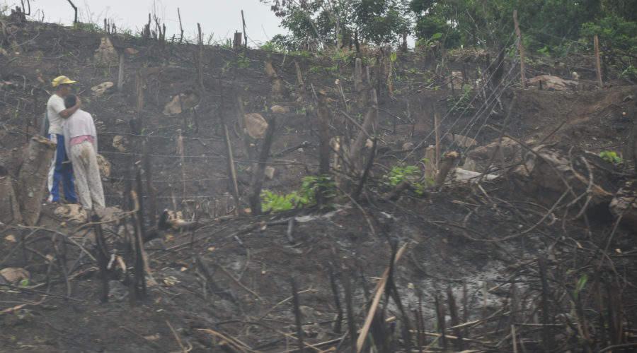 Deforestation in Peru