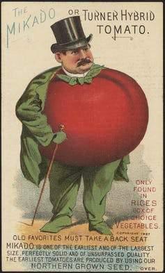 tomato seed ad