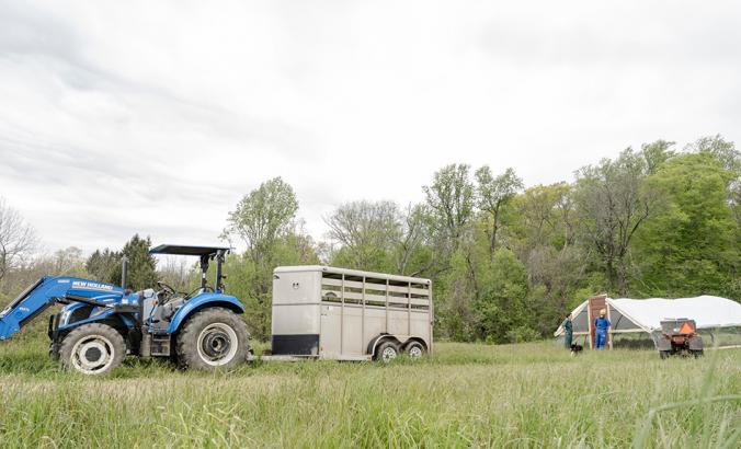 First-generation farmers at Pasture Song Farm Pottstown, PA prepare to release a trailer load of chickens onto pasture for the first time.