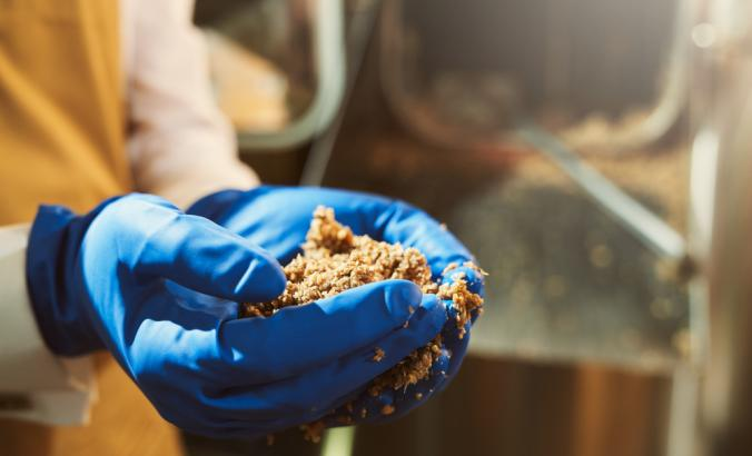 Close up of person's hands in blue rubber gloves holding milled malt grains during a brewery process.