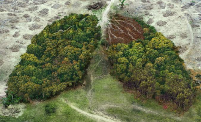 Deforested trees in the shape of human lungs