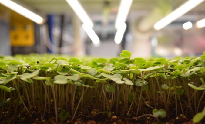 Upward Farms facilities combine aquaponics and vertical farming