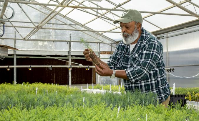 Kuldeep Singh, nursery manager for the L.A. Moran Reforestation Center in Davis, California.