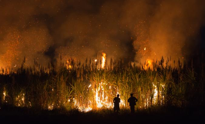 Sugarcane burned by farmer for pre-harvest in Northeast of Thailand.