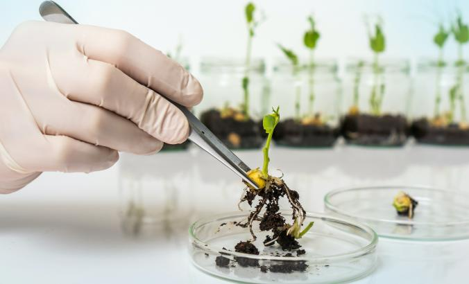 Scientist working with a plant seedling in lab